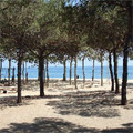Camping & bungalows Barcelona
